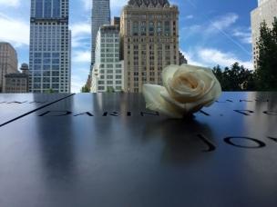 Rose at memorial